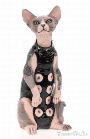 Коты из серии садо-мазо