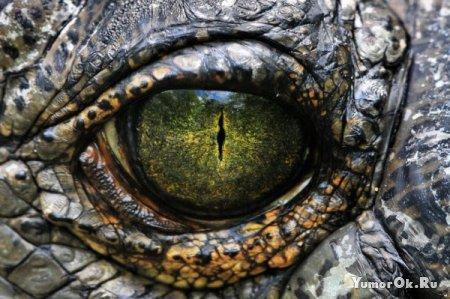 Забавные глазастые животные