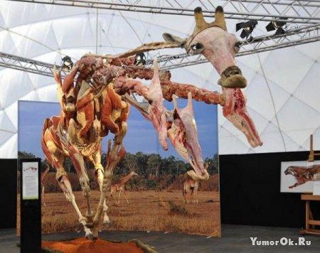 Выставка животных без шкуры