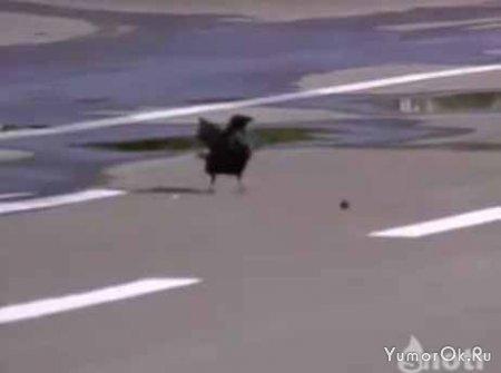 У птиц тоже есть мозги