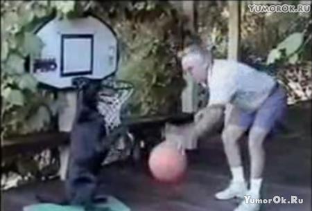 Собака-баскетболист