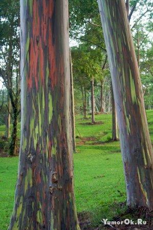 Радужные деревца